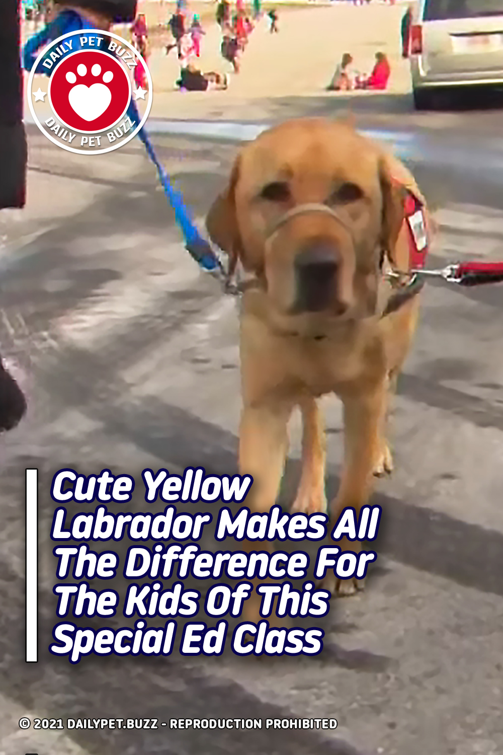 Cute Yellow Labrador Makes All The Difference For The Kids Of This Special Ed Class