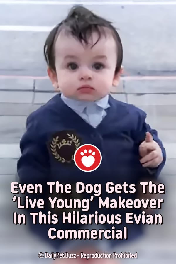 Even The Dog Gets The \'Live Young\' Makeover In This Hilarious Evian Commercial