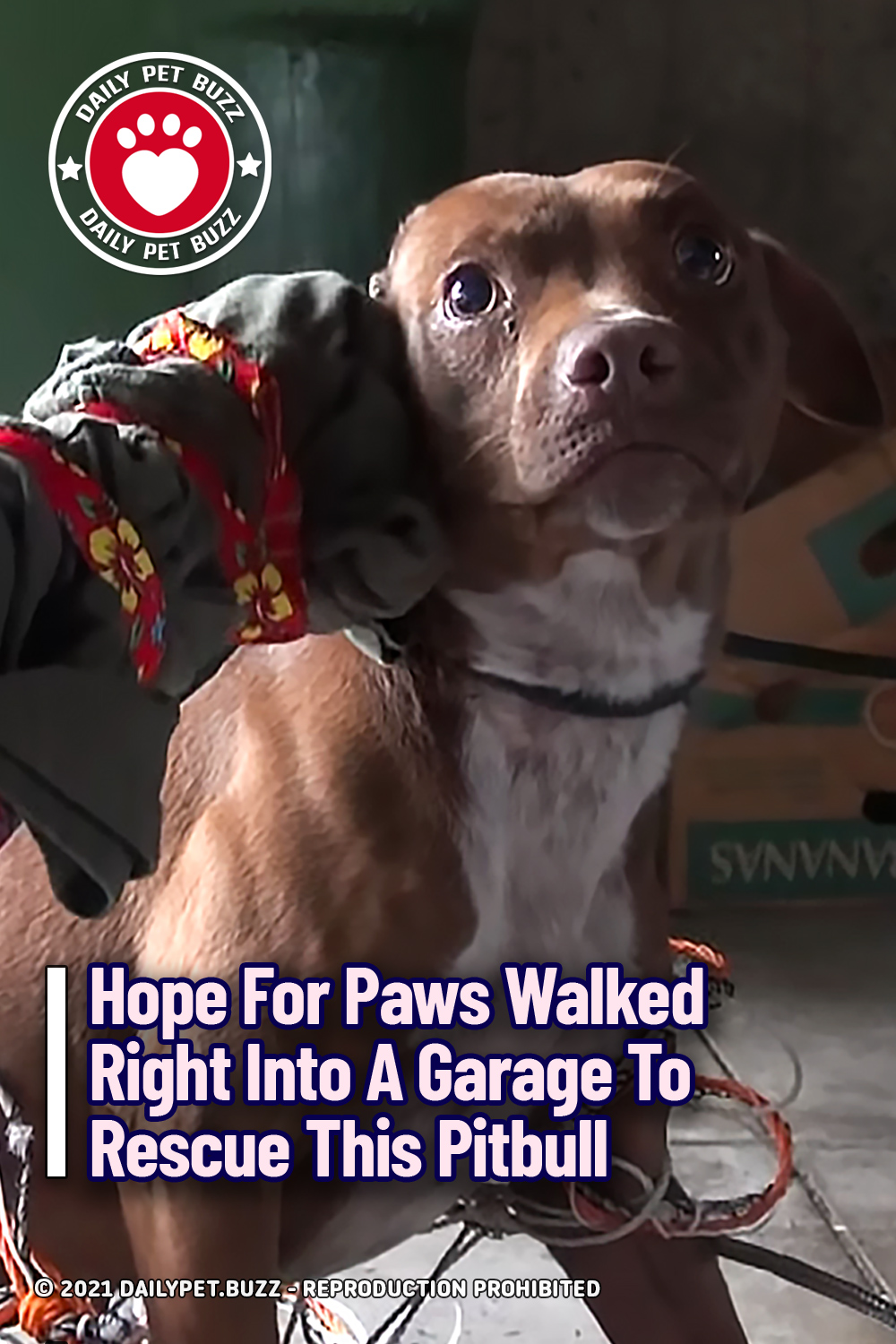 Hope For Paws Walked Right Into A Garage To Rescue This Pitbull