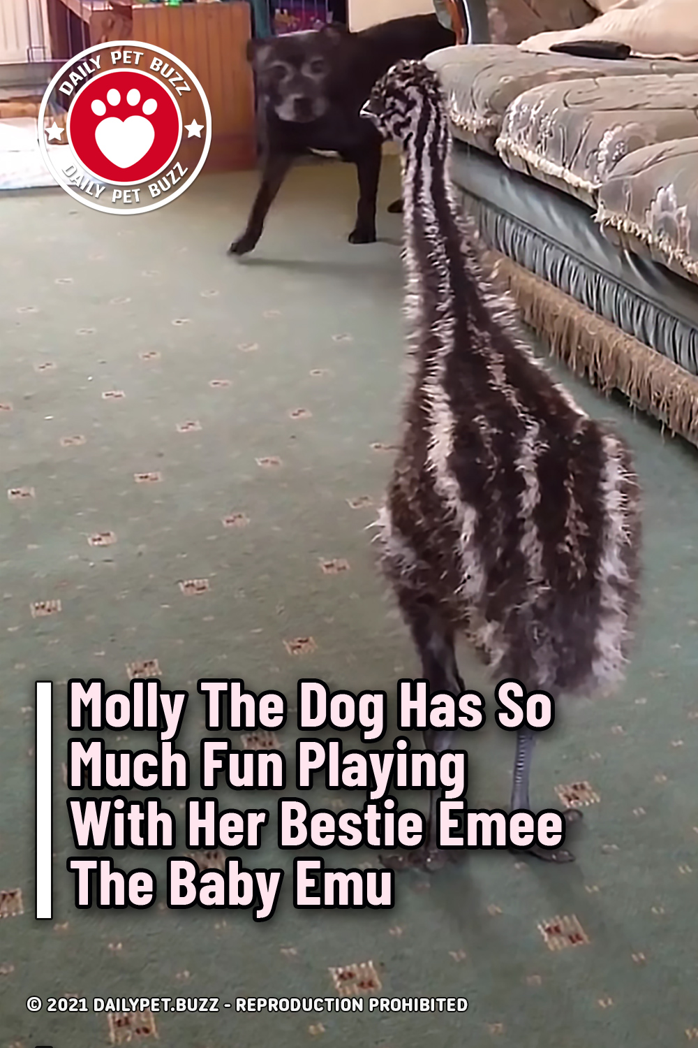 Molly The Dog Has So Much Fun Playing With Her Bestie Emee The Baby Emu