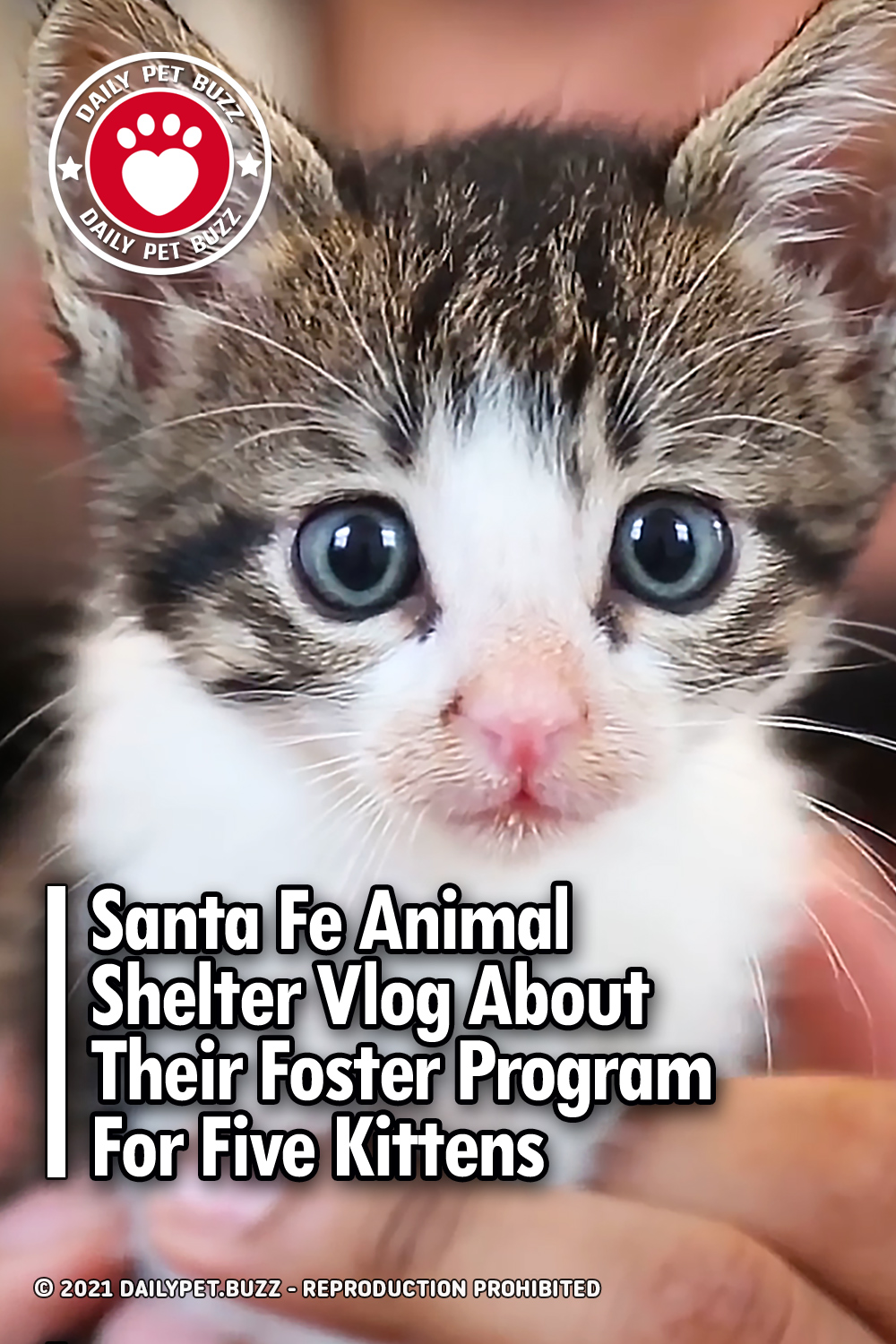 Santa Fe Animal Shelter Vlog About Their Foster Program For Five Kittens