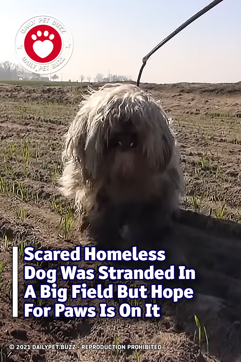Scared Homeless Dog Was Stranded In A Big Field But Hope For Paws Is On It