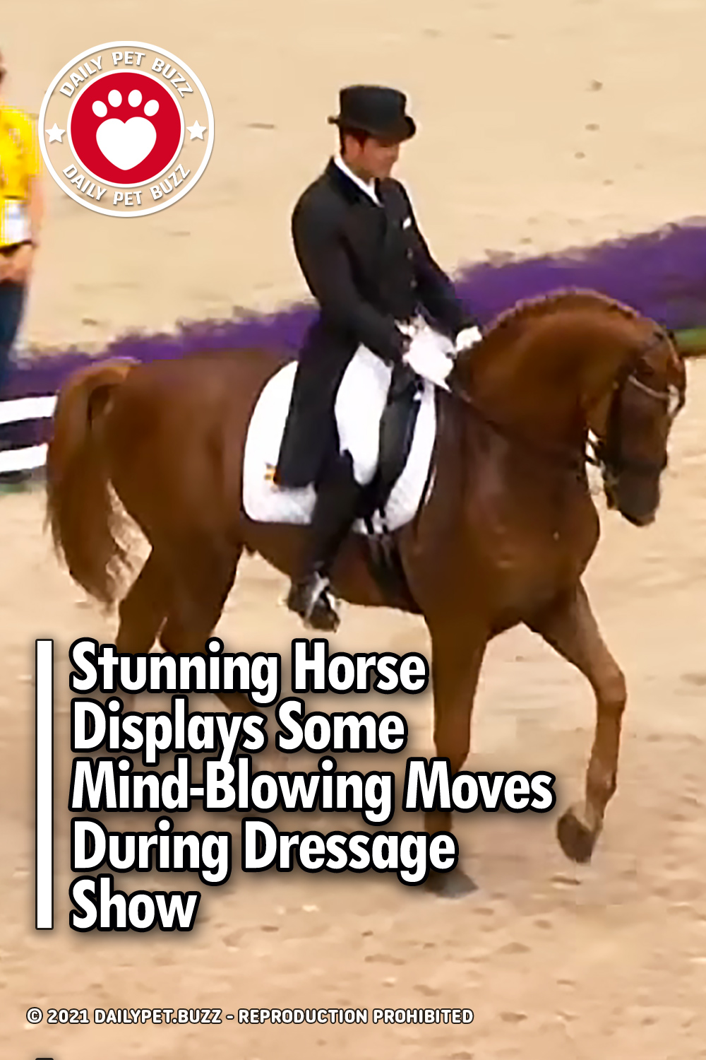 Stunning Horse Displays Some Mind-Blowing Moves During Dressage Show