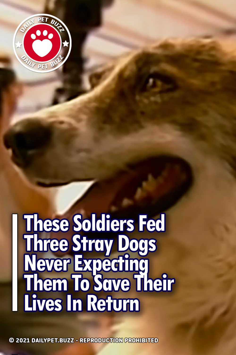 These Soldiers Fed Three Stray Dogs Never Expecting Them To Save Their Lives In Return