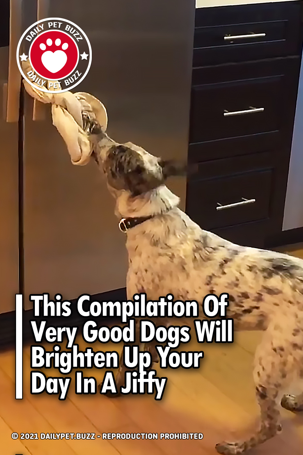 This Compilation Of Very Good Dogs Will Brighten Up Your Day In A Jiffy