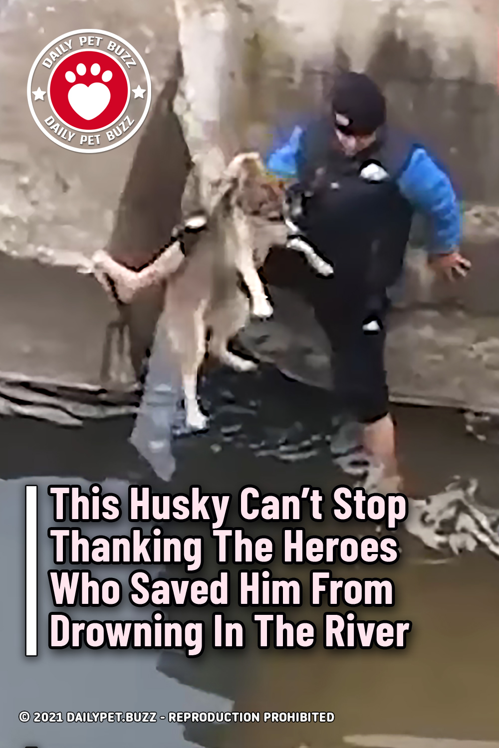 This Husky Can\'t Stop Thanking The Heroes Who Saved Him From Drowning In The River