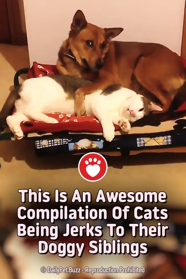 This Is An Awesome Compilation Of Cats Being Jerks To Their Doggy Siblings