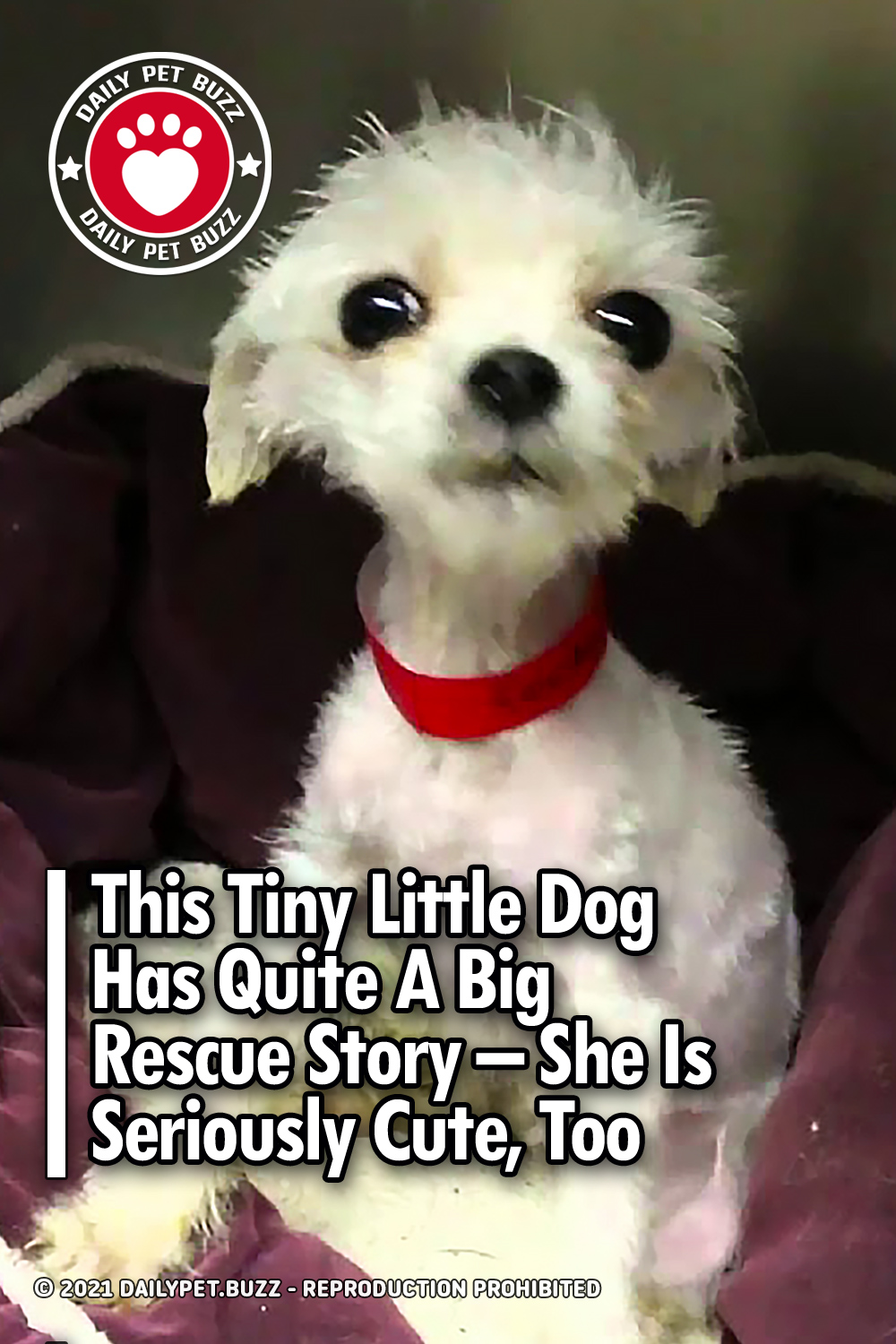 This Tiny Little Dog Has Quite A Big Rescue Story – She Is Seriously Cute, Too