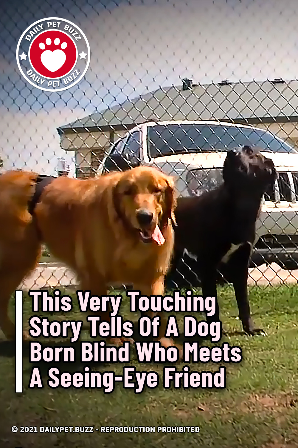 This Very Touching Story Tells Of A Dog Born Blind Who Meets A Seeing-Eye Friend