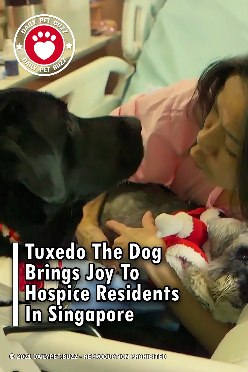 Tuxedo The Dog Brings Joy To Hospice Residents In Singapore