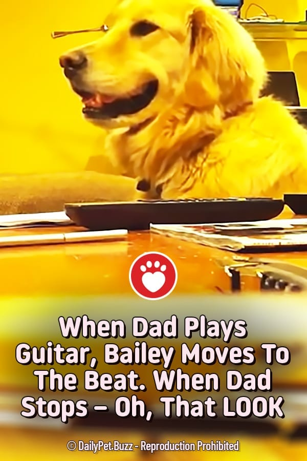 When Dad Plays Guitar, Bailey Moves To The Beat. When Dad Stops – Oh, That LOOK