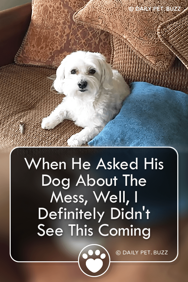 When He Asked His Dog About The Mess, Well, I Definitely Didn\'t See This Coming