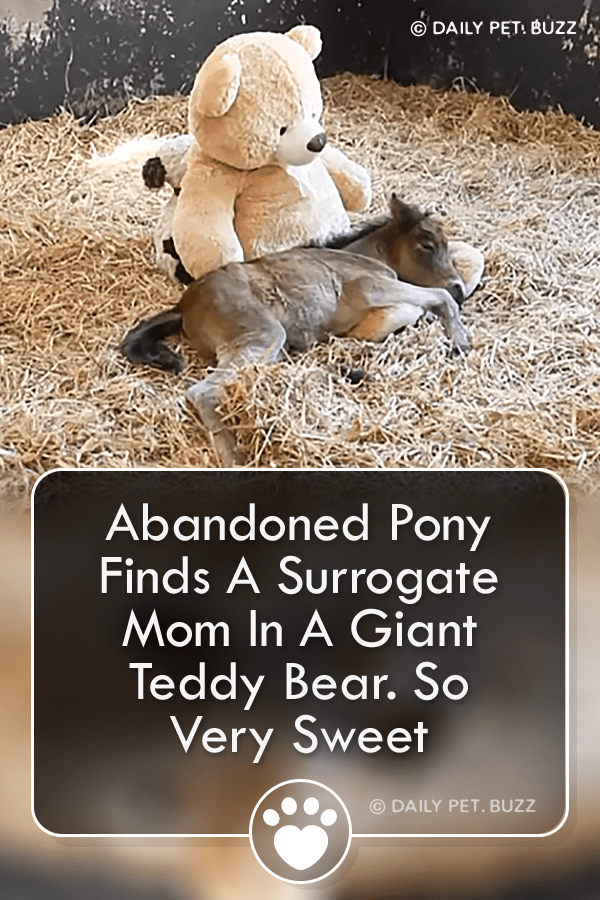 Abandoned Pony Finds A Surrogate Mom In A Giant Teddy Bear. So Very Sweet