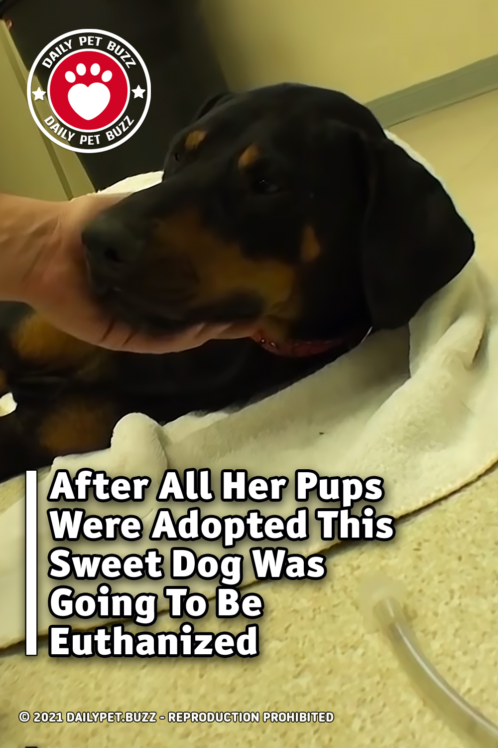 After All Her Pups Were Adopted This Sweet Dog Was Going To Be Euthanized