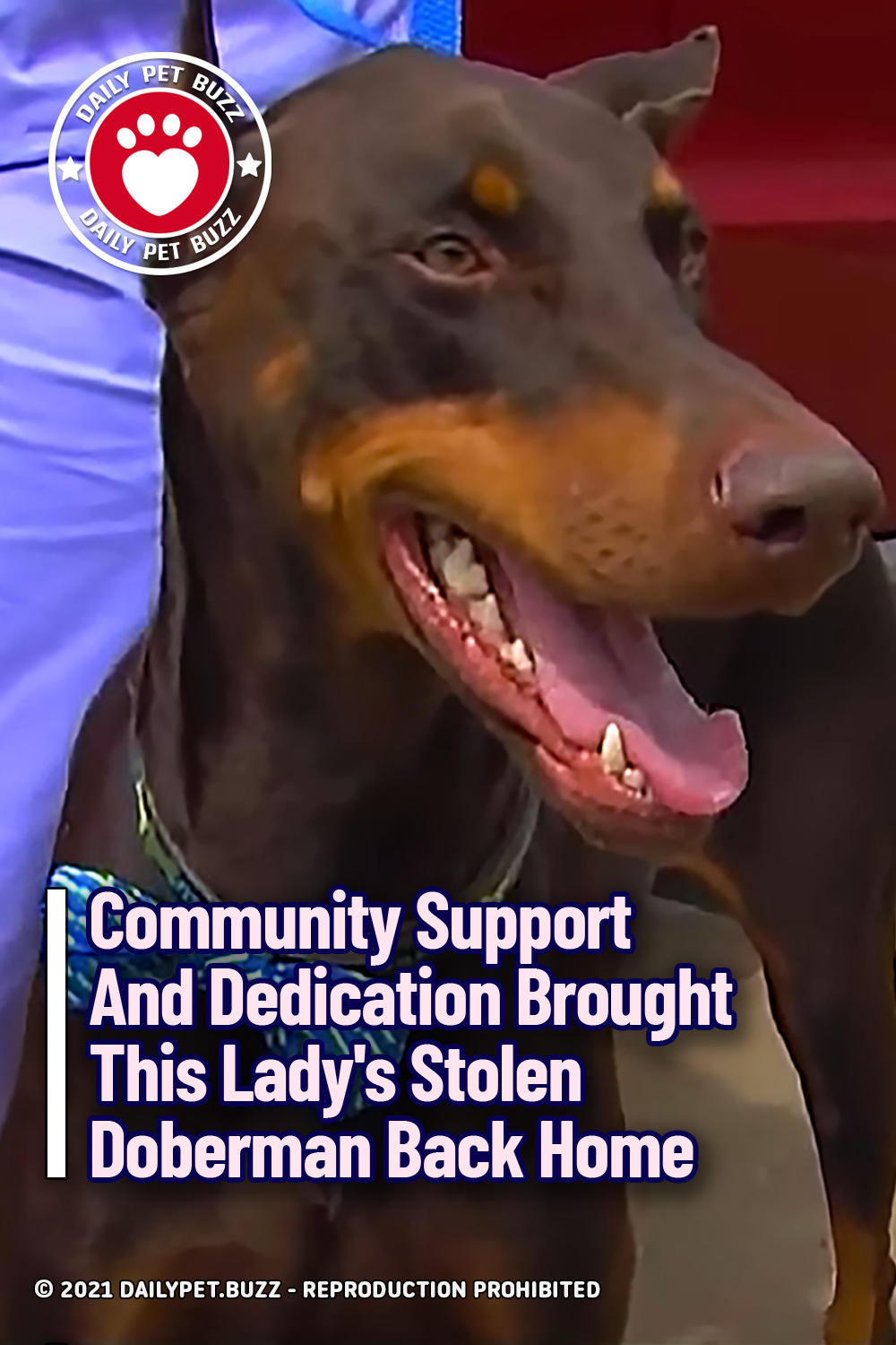 Community Support And Dedication Brought This Lady\'s Stolen Doberman Back Home