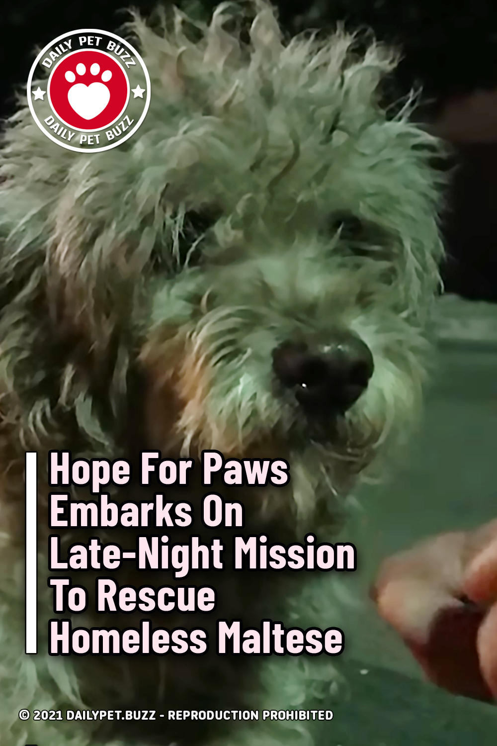 Hope For Paws Embarks On Late-Night Mission To Rescue Homeless Maltese