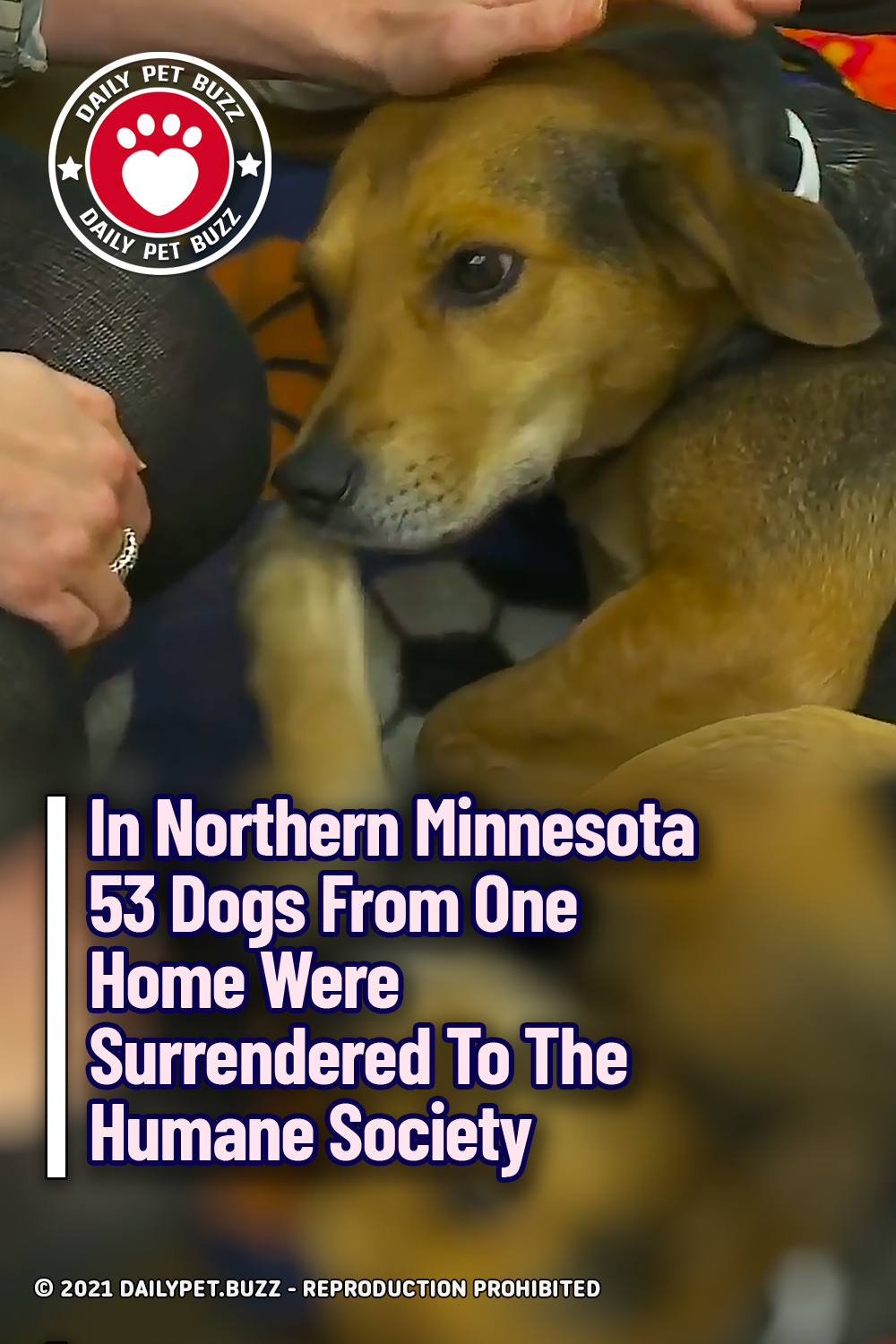In Northern Minnesota 53 Dogs From One Home Were Surrendered To The Humane Society