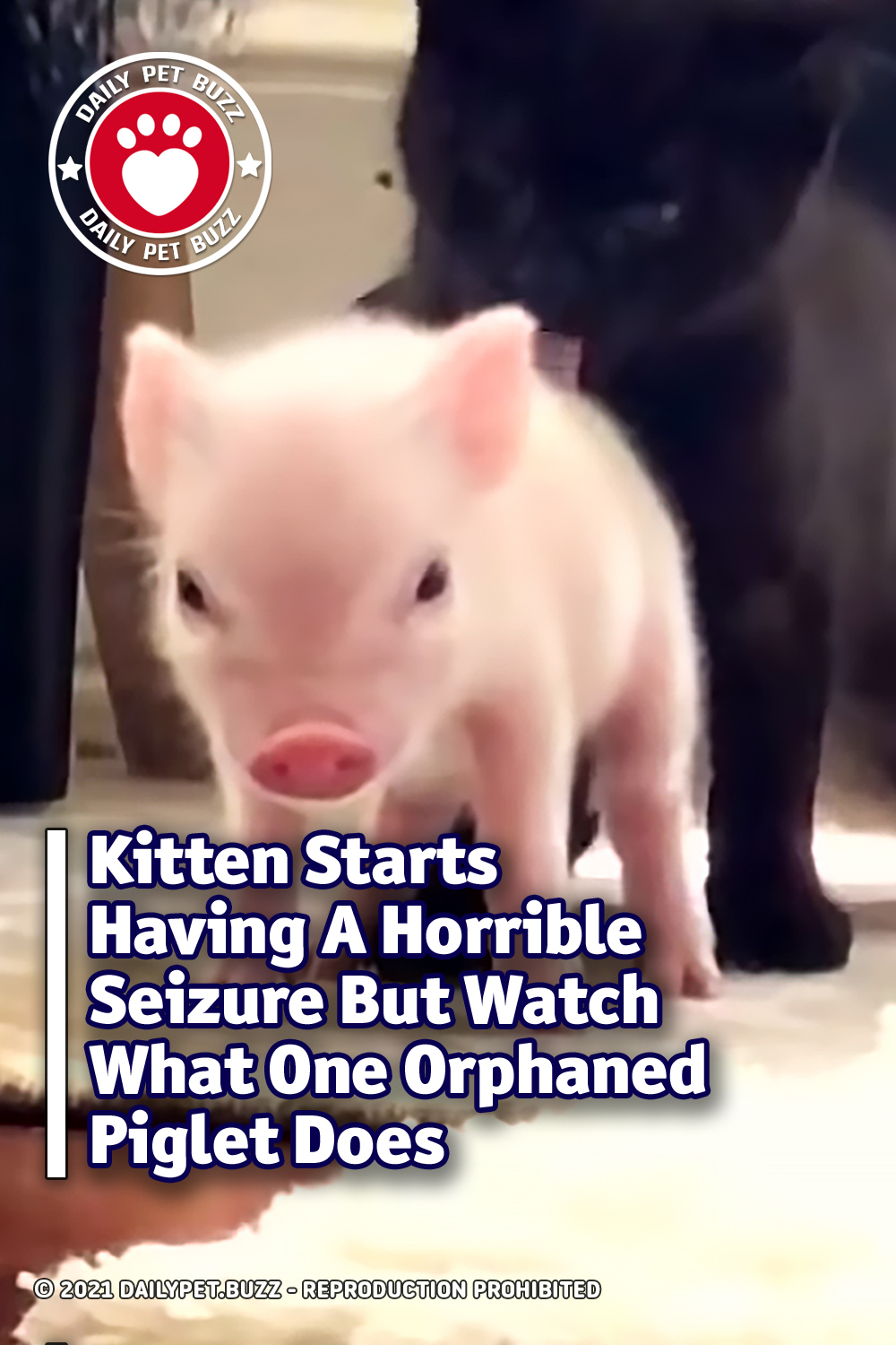 Kitten Starts Having A Horrible Seizure But Watch What One Orphaned Piglet Does