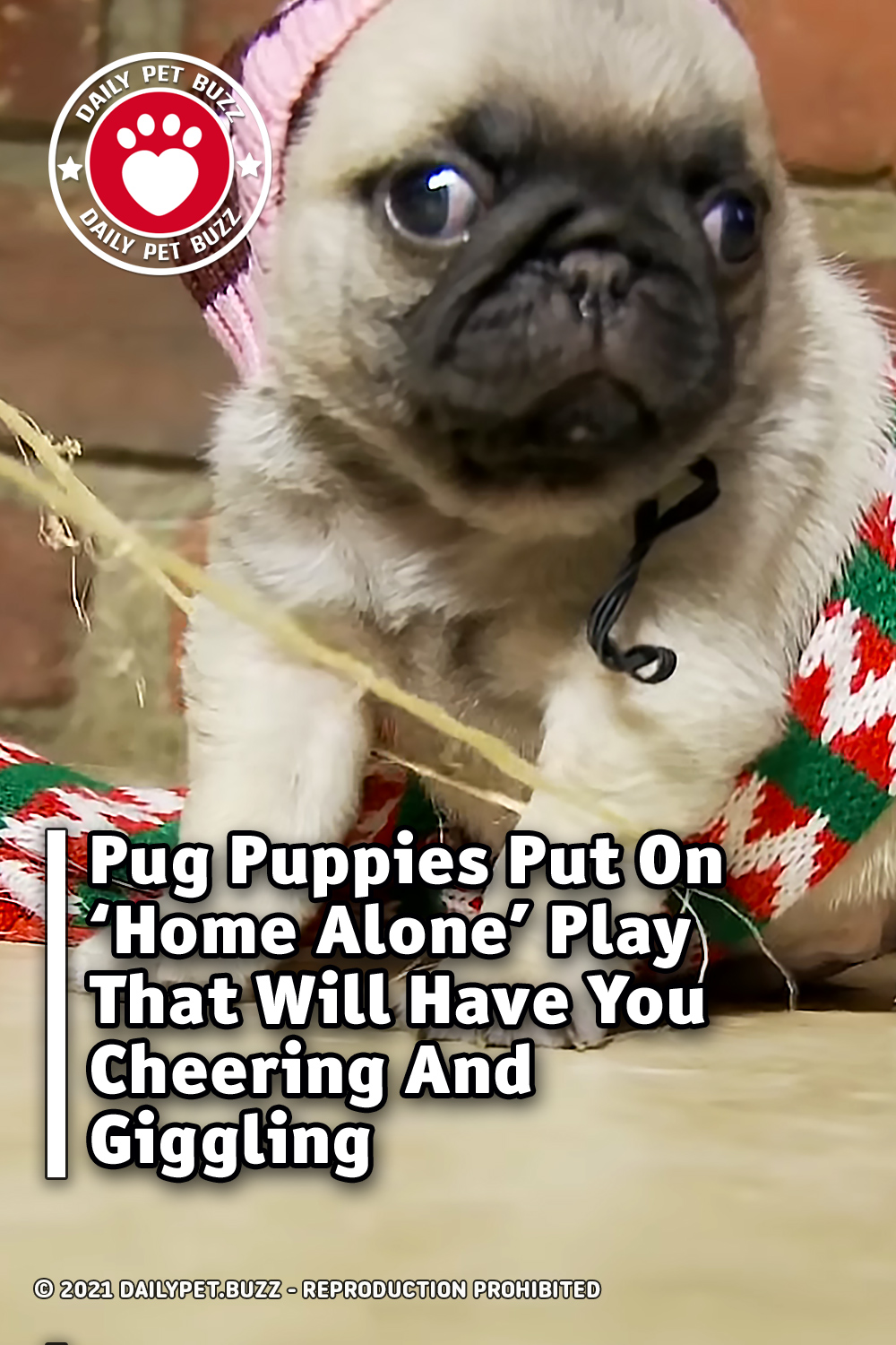 Pug Puppies Put On \'Home Alone\' Play That Will Have You Cheering And Giggling