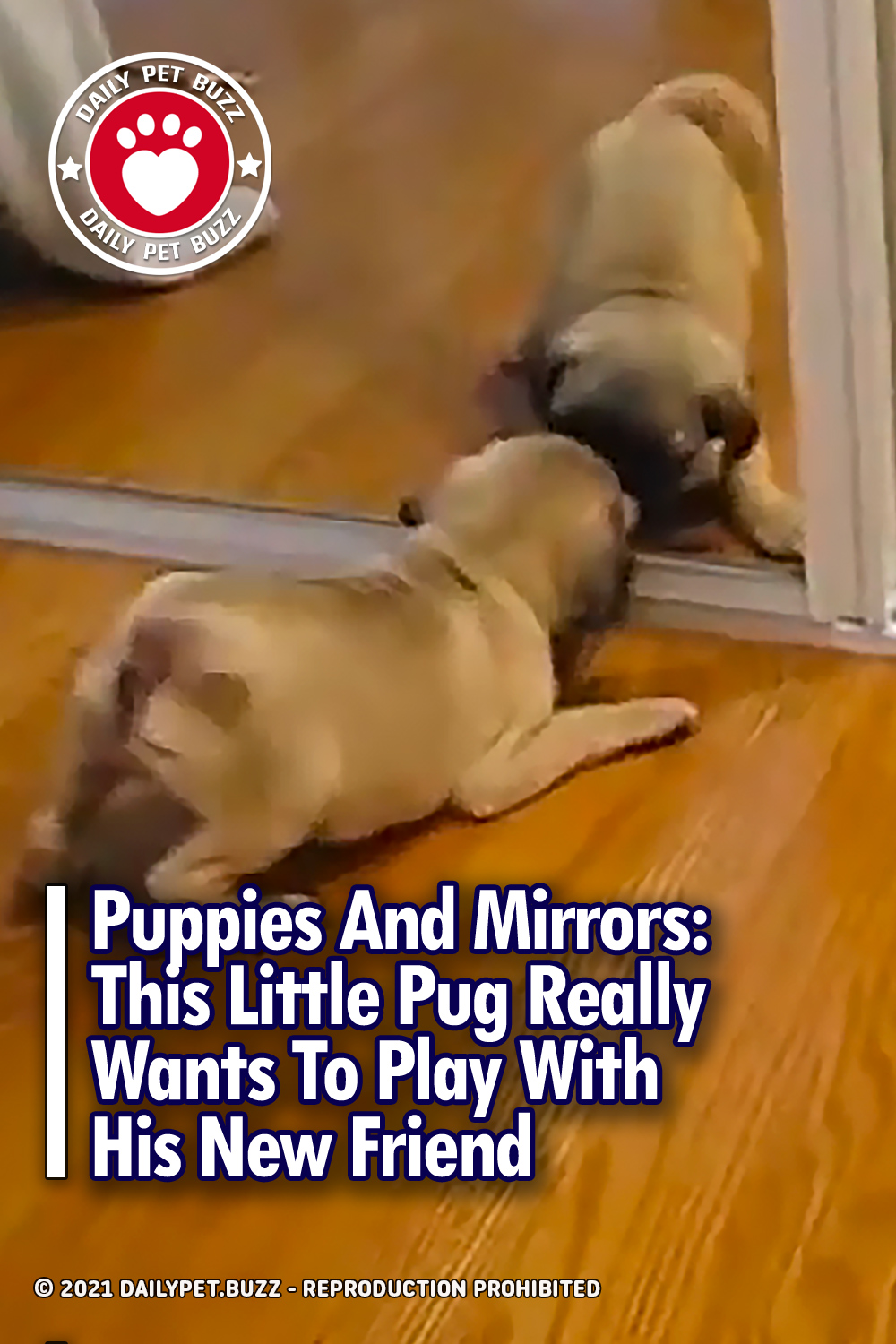 Puppies And Mirrors: This Little Pug Really Wants To Play With His New Friend