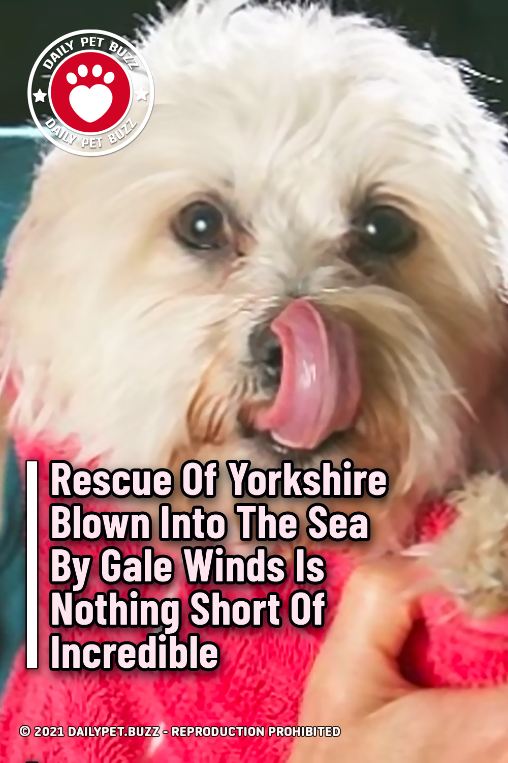 Rescue Of Yorkshire Blown Into The Sea By Gale Winds Is Nothing Short Of Incredible