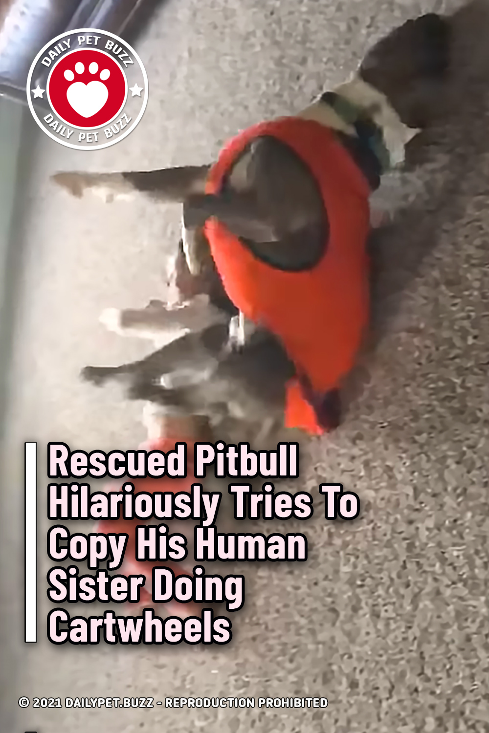 Rescued Pitbull Hilariously Tries To Copy His Human Sister Doing Cartwheels