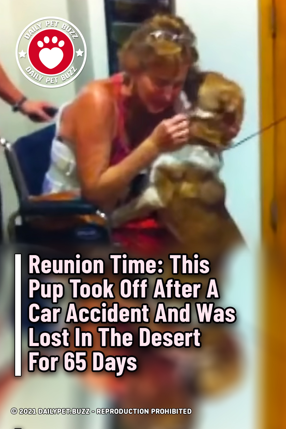 Reunion Time: This Pup Took Off After A Car Accident And Was Lost In The Desert For 65 Days
