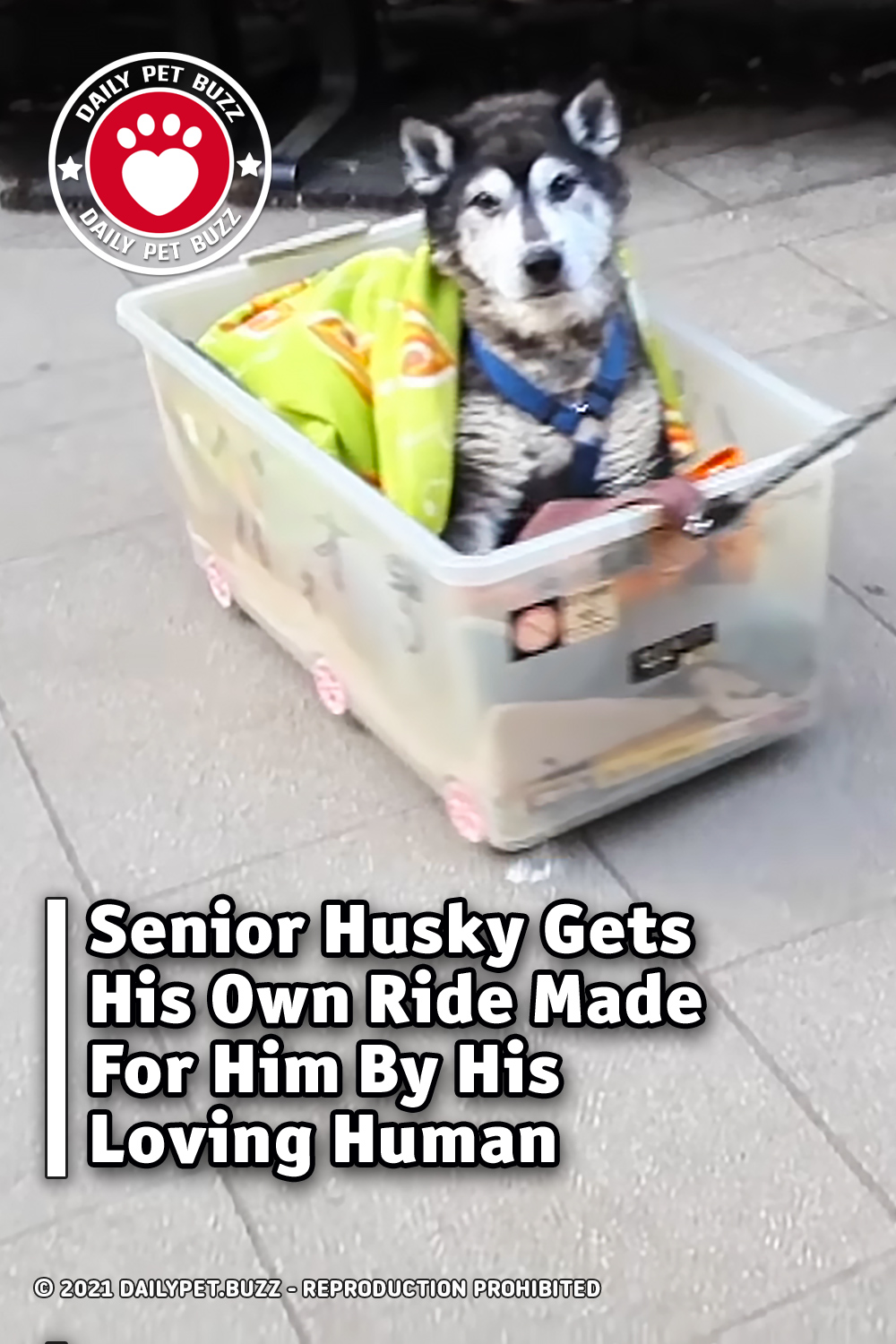 Senior Husky Gets His Own Ride Made For Him By His Loving Human