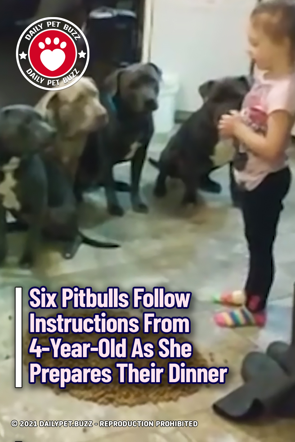 Six Pitbulls Follow Instructions From 4-Year-Old As She Prepares Their Dinner