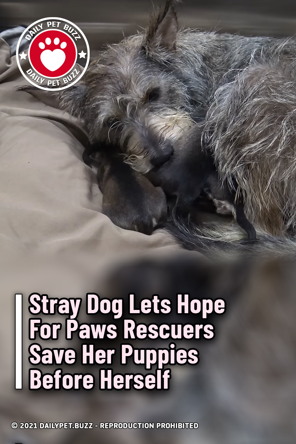 Stray Dog Lets Hope For Paws Rescuers Save Her Puppies Before Herself