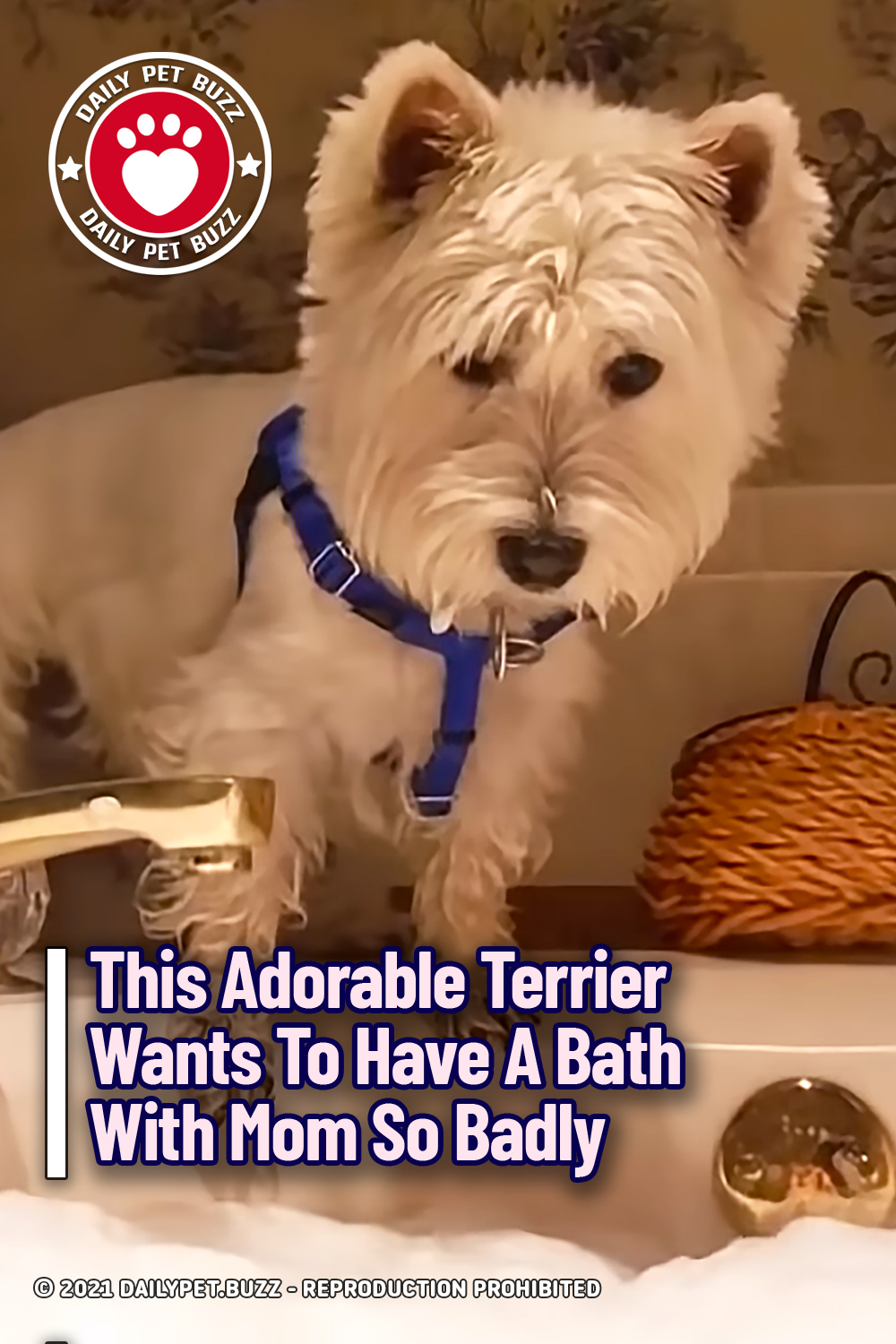 This Adorable Terrier Wants To Have A Bath With Mom So Badly