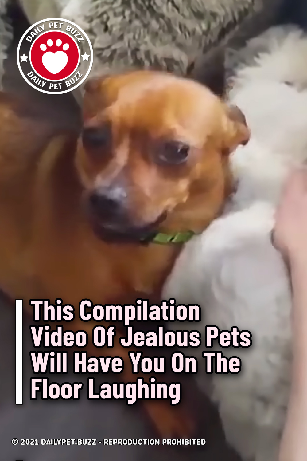 This Compilation Video Of Jealous Pets Will Have You On The Floor Laughing