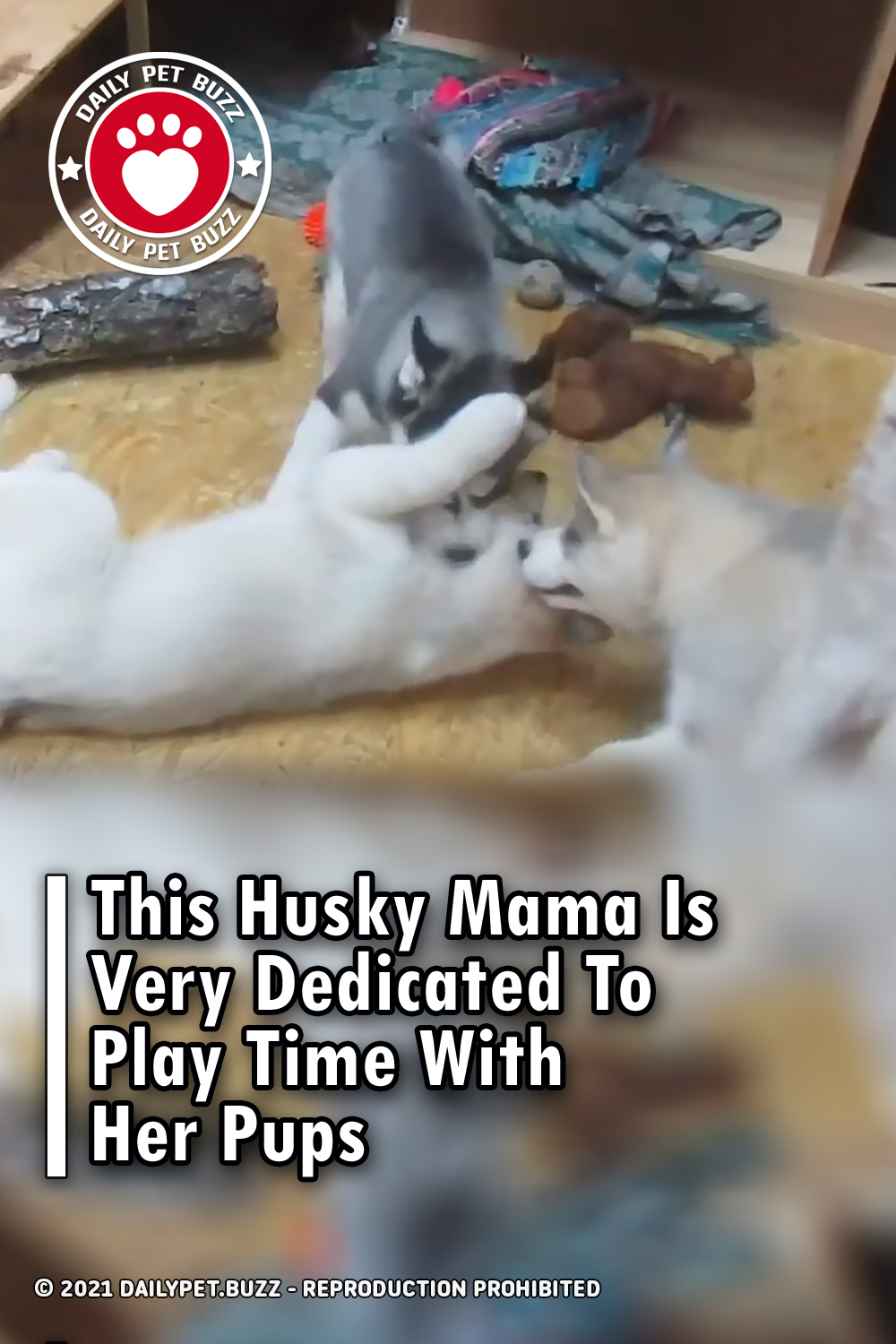 This Husky Mama Is Very Dedicated To Play Time With Her Pups