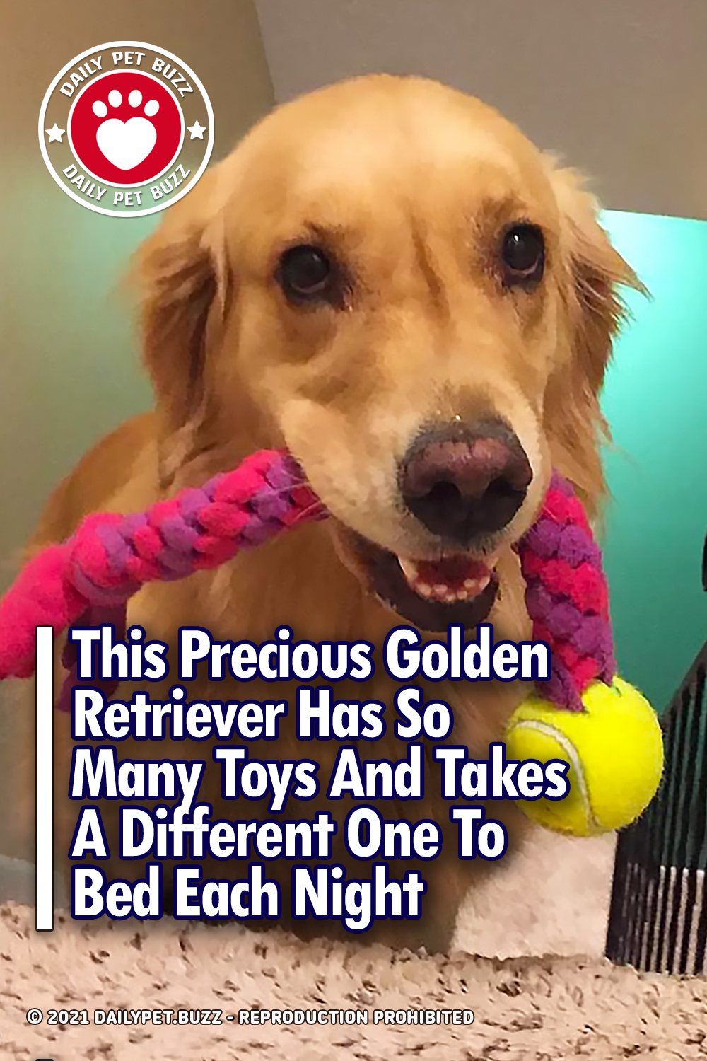 This Precious Golden Retriever Has So Many Toys And Takes A Different One To Bed Each Night