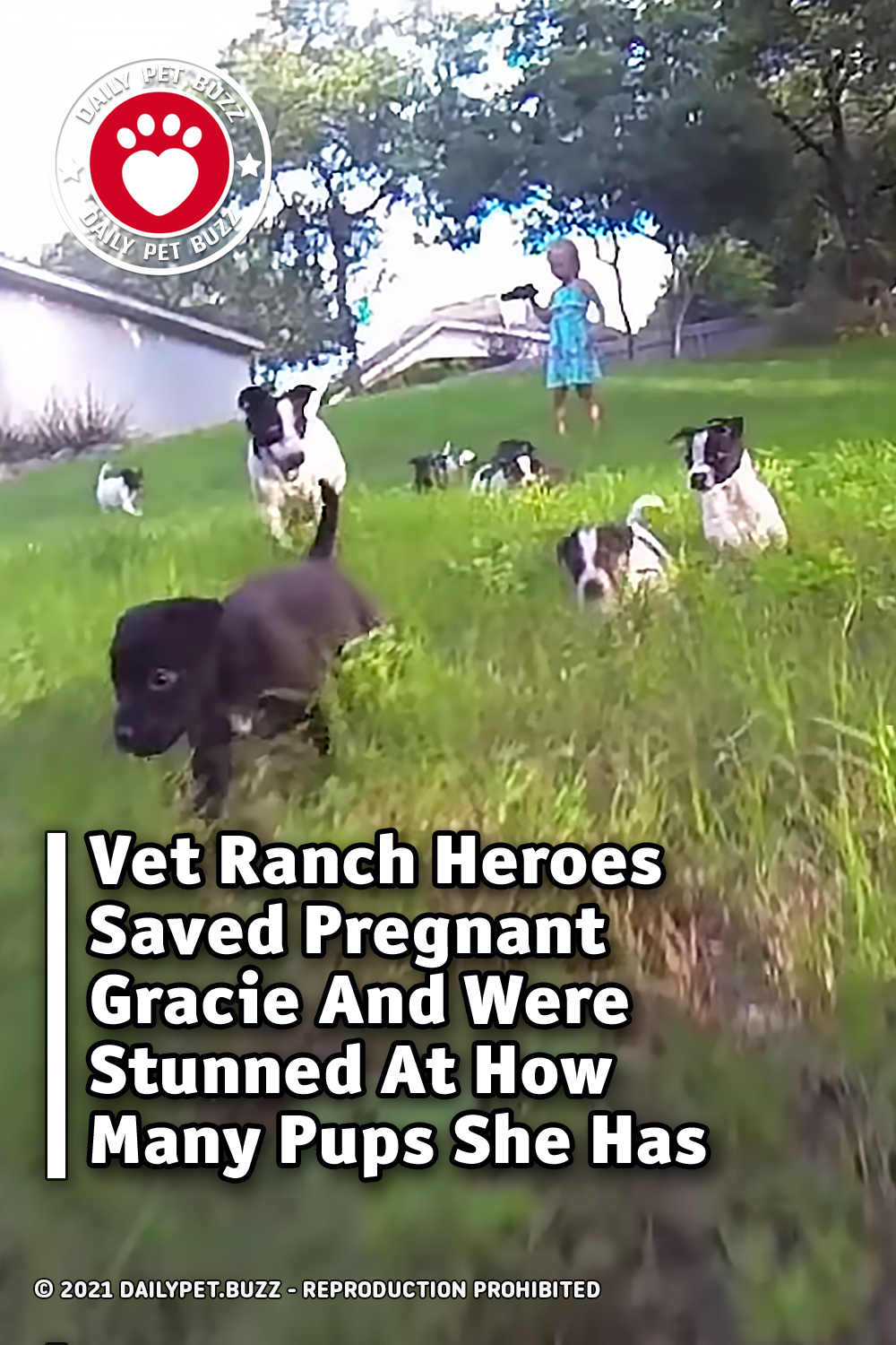 Vet Ranch Heroes Saved Pregnant Gracie And Were Stunned At How Many Pups She Has