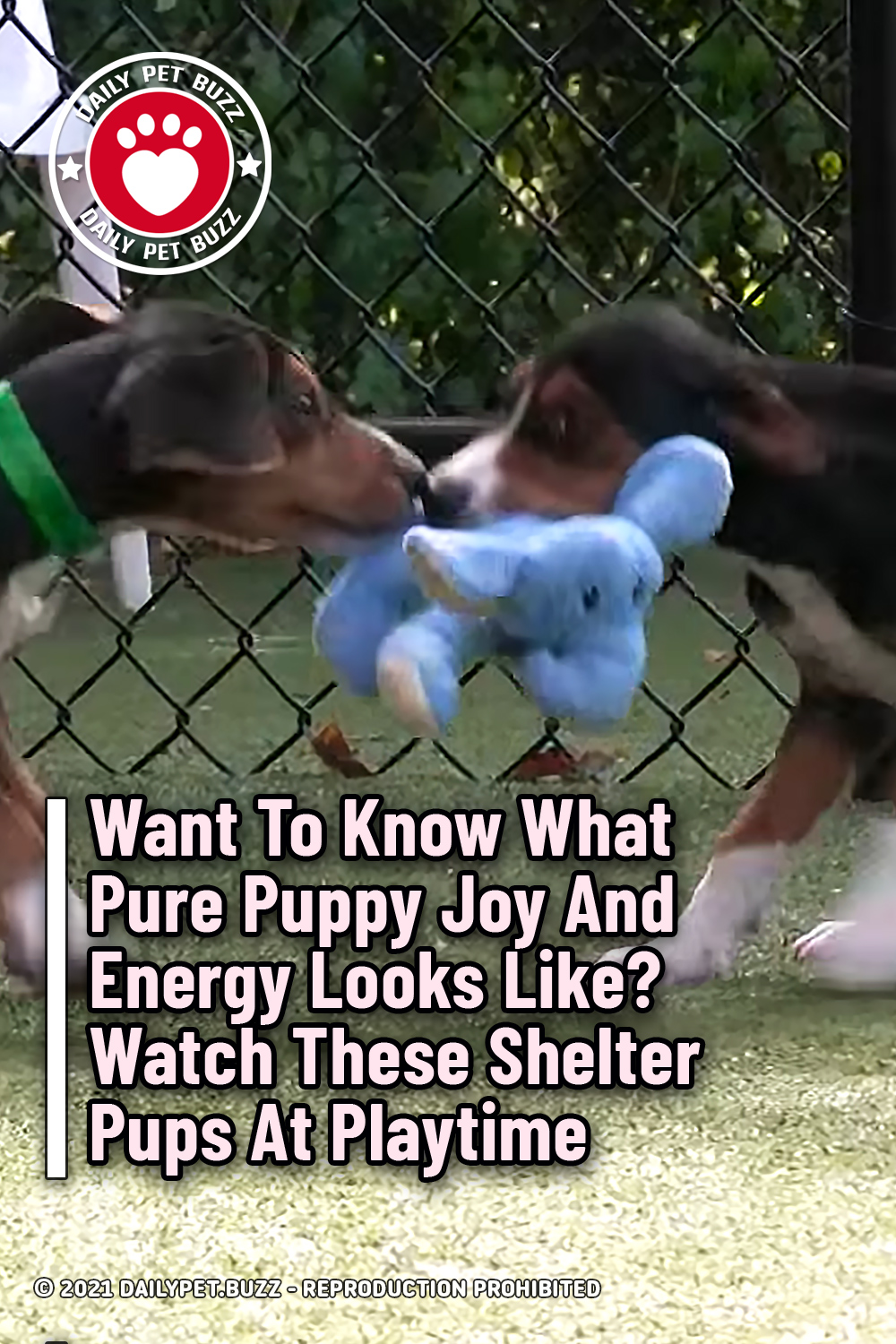 Want To Know What Pure Puppy Joy And Energy Looks Like? Watch These Shelter Pups At Playtime