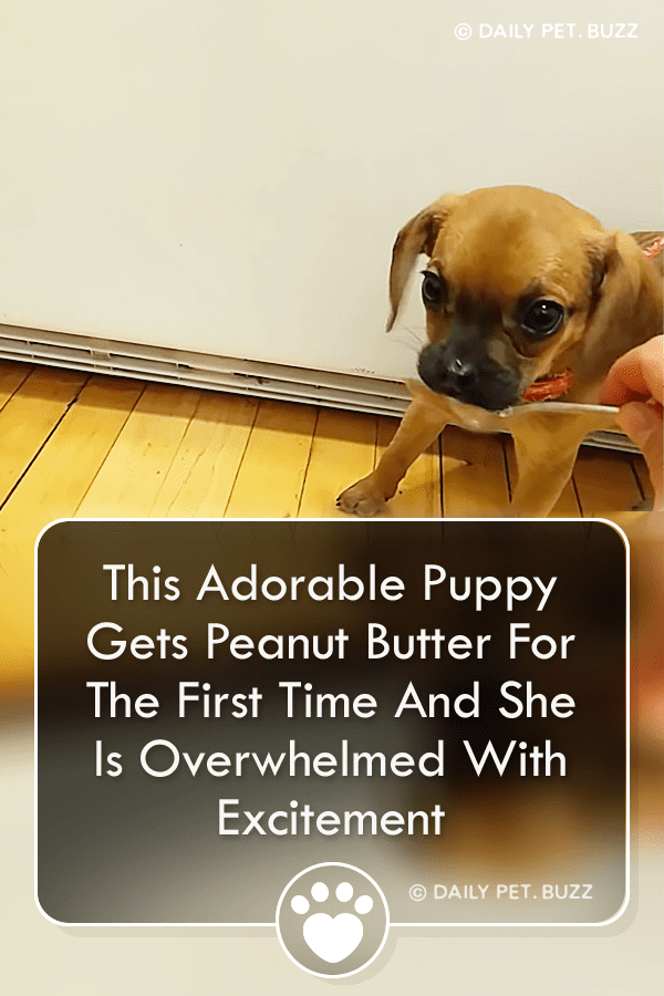This Adorable Puppy Gets Peanut Butter For The First Time And She Is Overwhelmed With Excitement