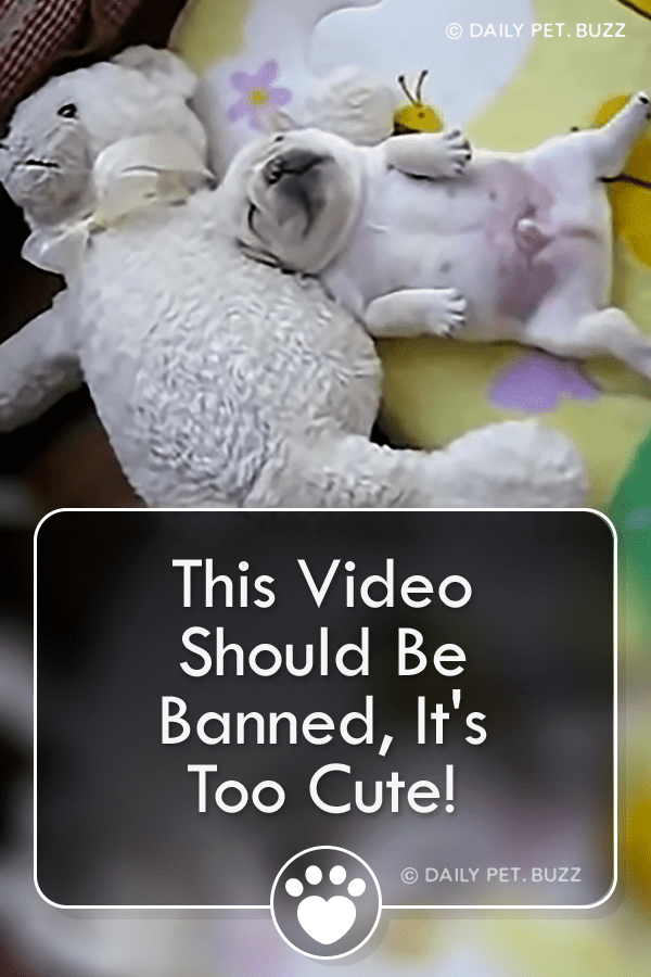 This Video Should Be Banned, It\'s Too Cute!