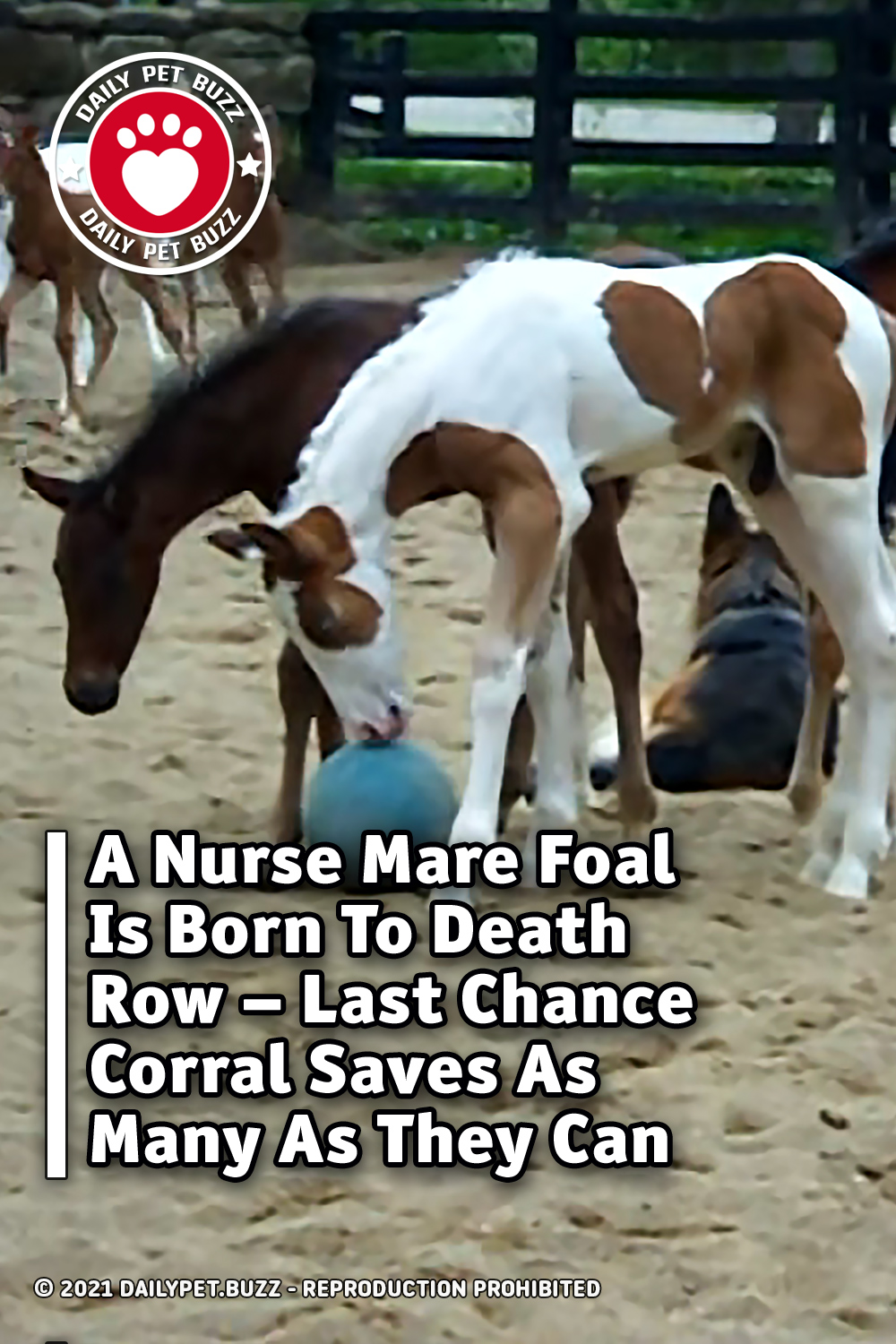 A Nurse Mare Foal Is Born To Death Row – Last Chance Corral Saves As Many As They Can
