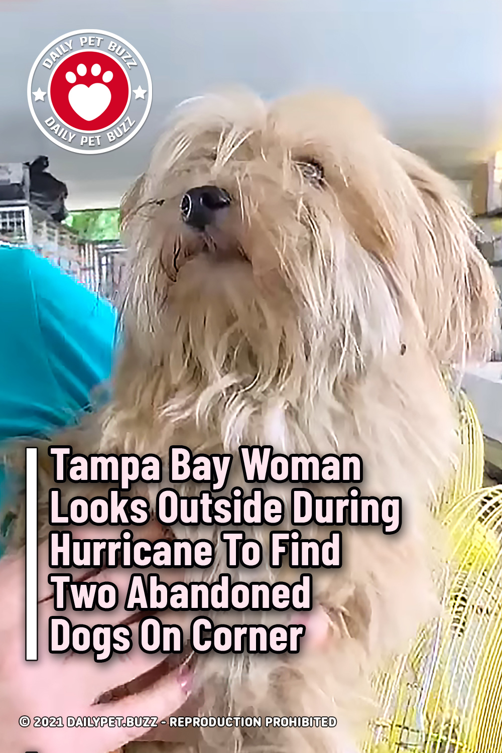 Tampa Bay Woman Looks Outside During Hurricane To Find Two Abandoned Dogs On Corner