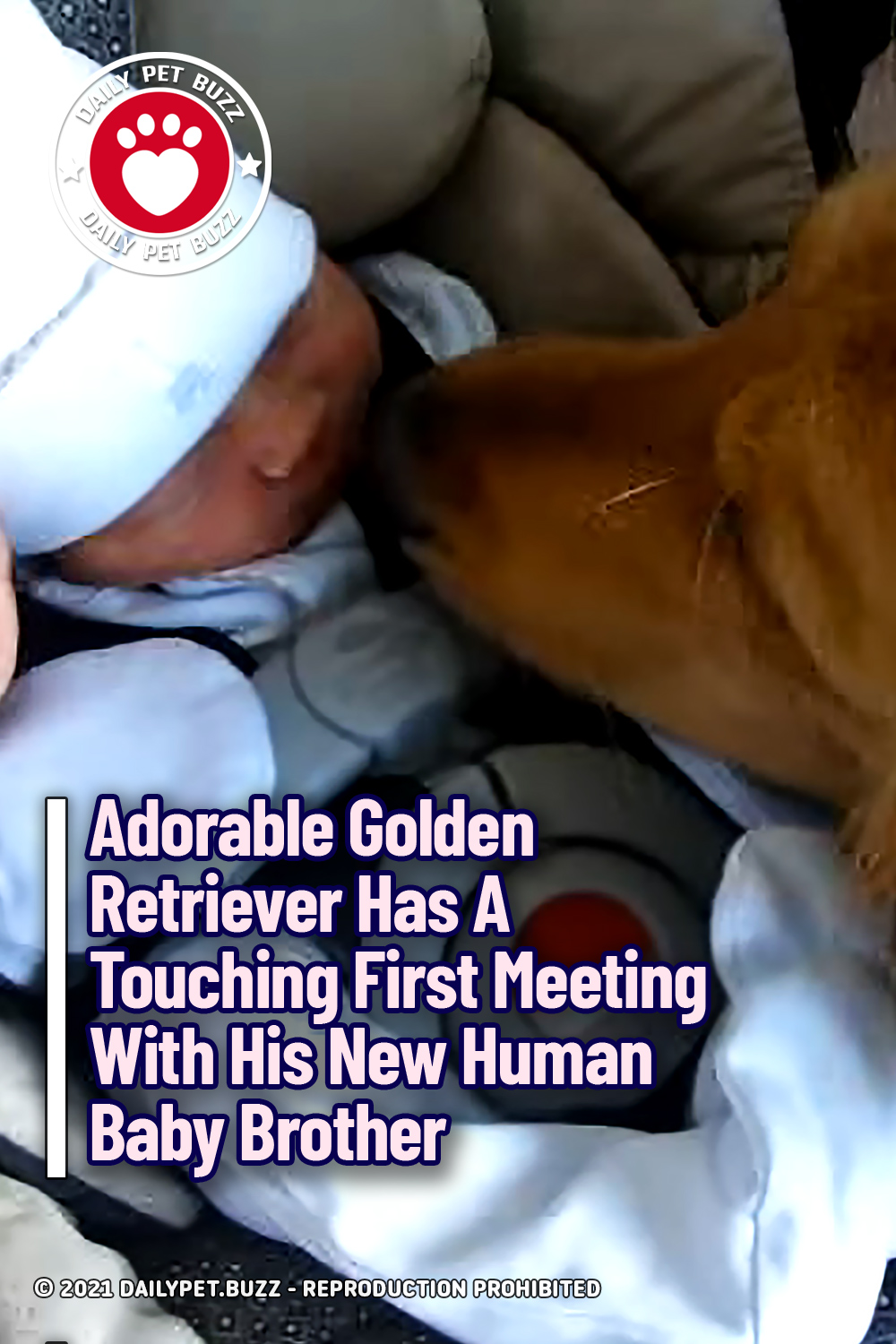 Adorable Golden Retriever Has A Touching First Meeting With His New Human Baby Brother