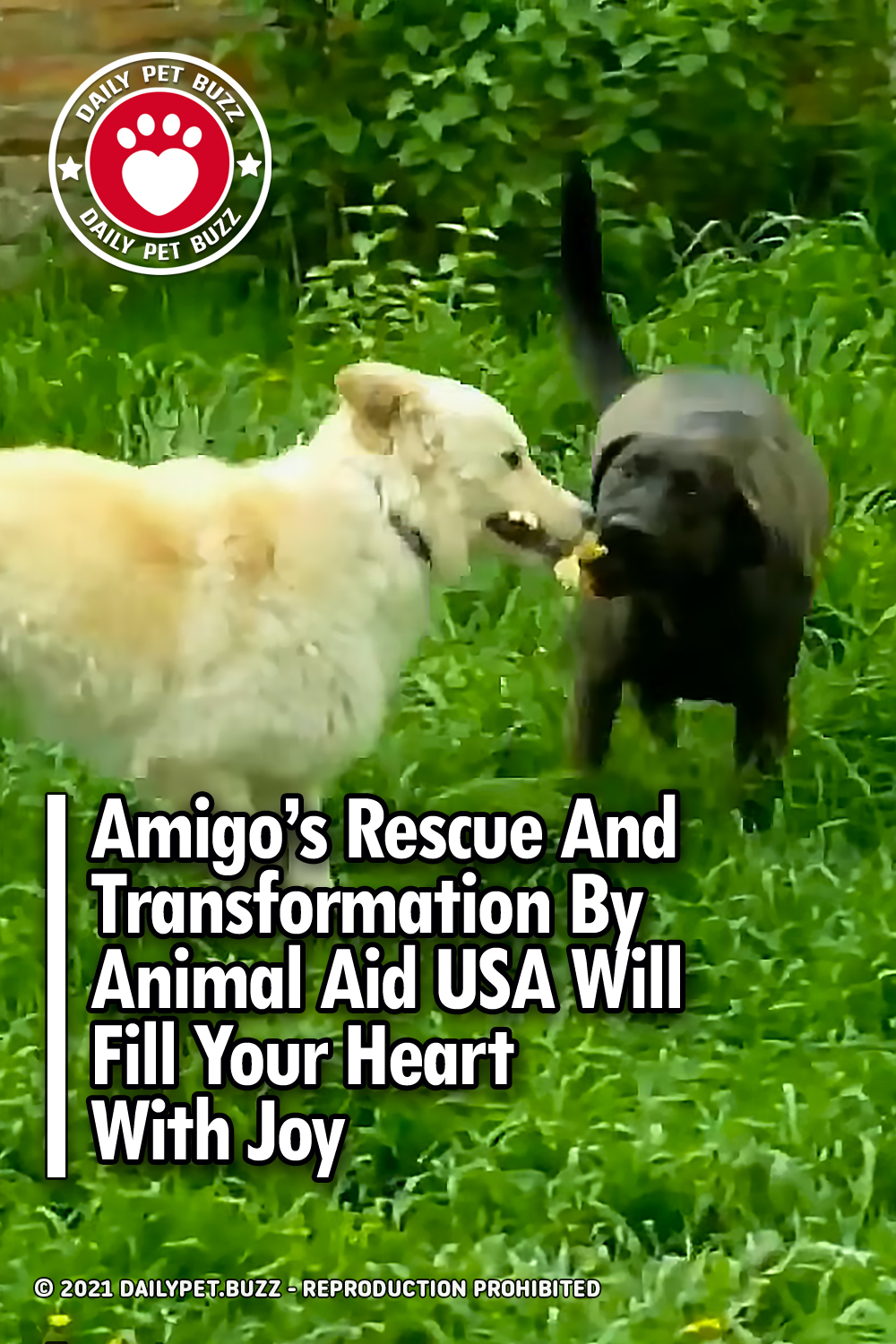 Amigo\'s Rescue And Transformation By Animal Aid USA Will Fill Your Heart With Joy