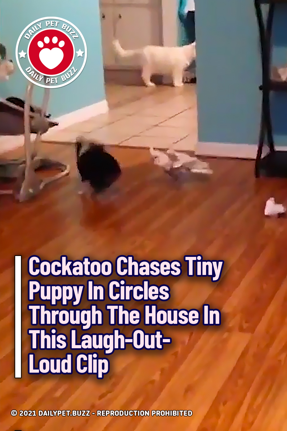 Cockatoo Chases Tiny Puppy In Circles Through The House In This Laugh-Out-Loud Clip