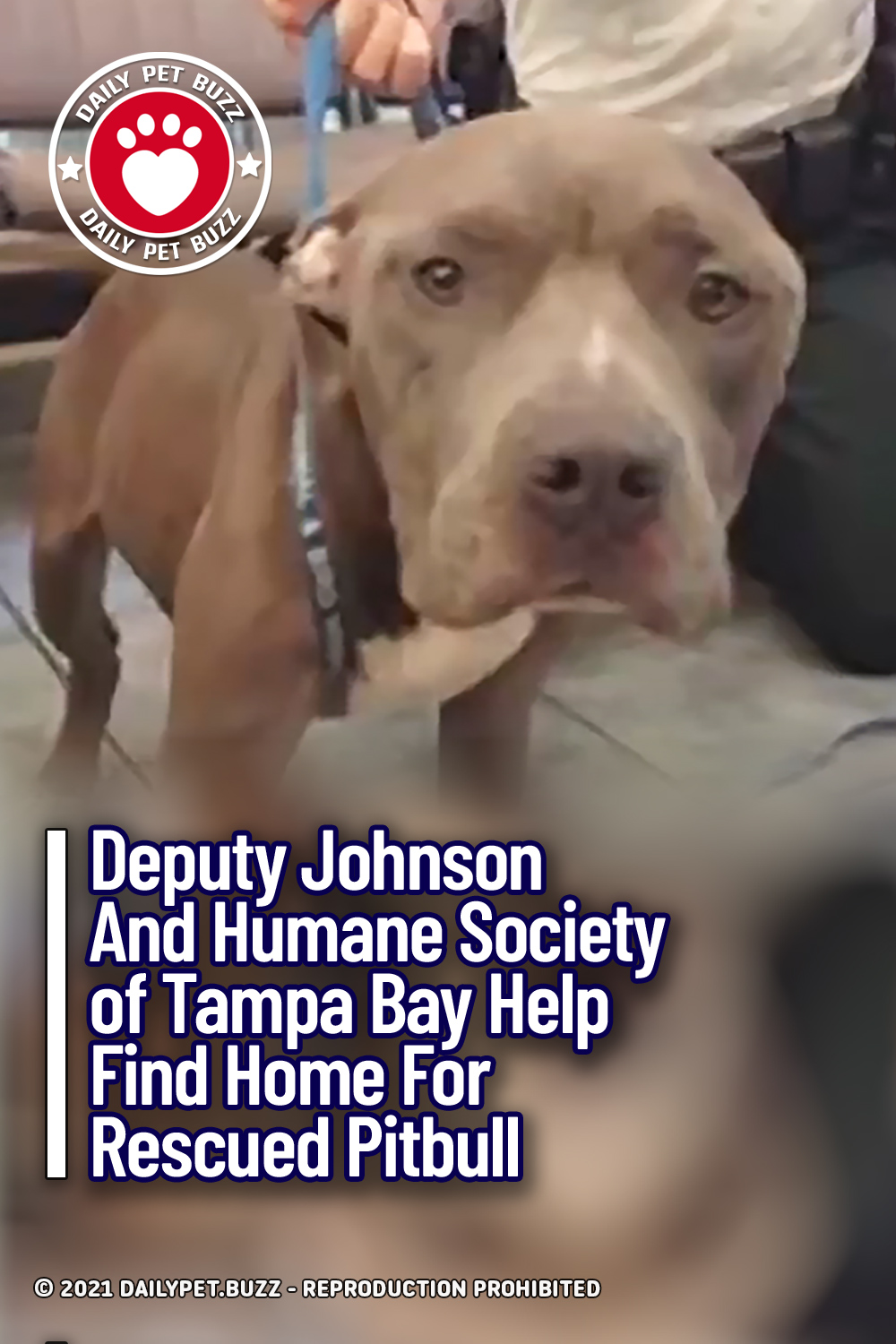 Deputy Johnson And Humane Society of Tampa Bay Help Find Home For Rescued Pitbull