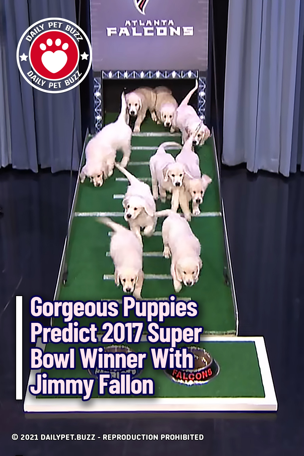Gorgeous Puppies Predict 2017 Super Bowl Winner With Jimmy Fallon