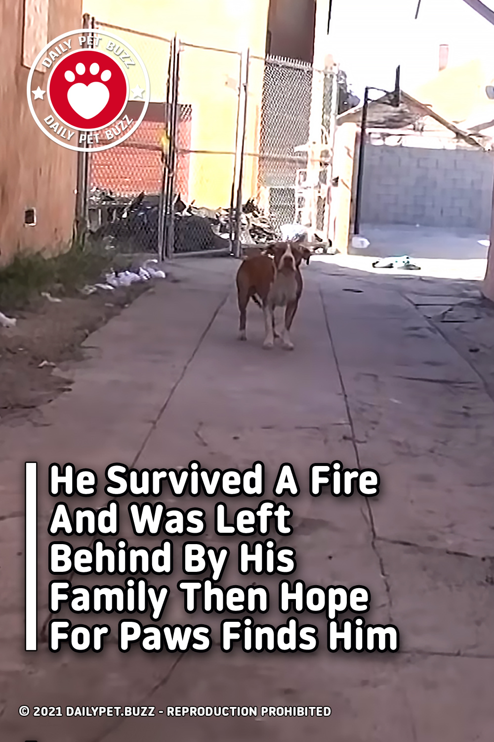 He Survived A Fire And Was Left Behind By His Family Then Hope For Paws Finds Him