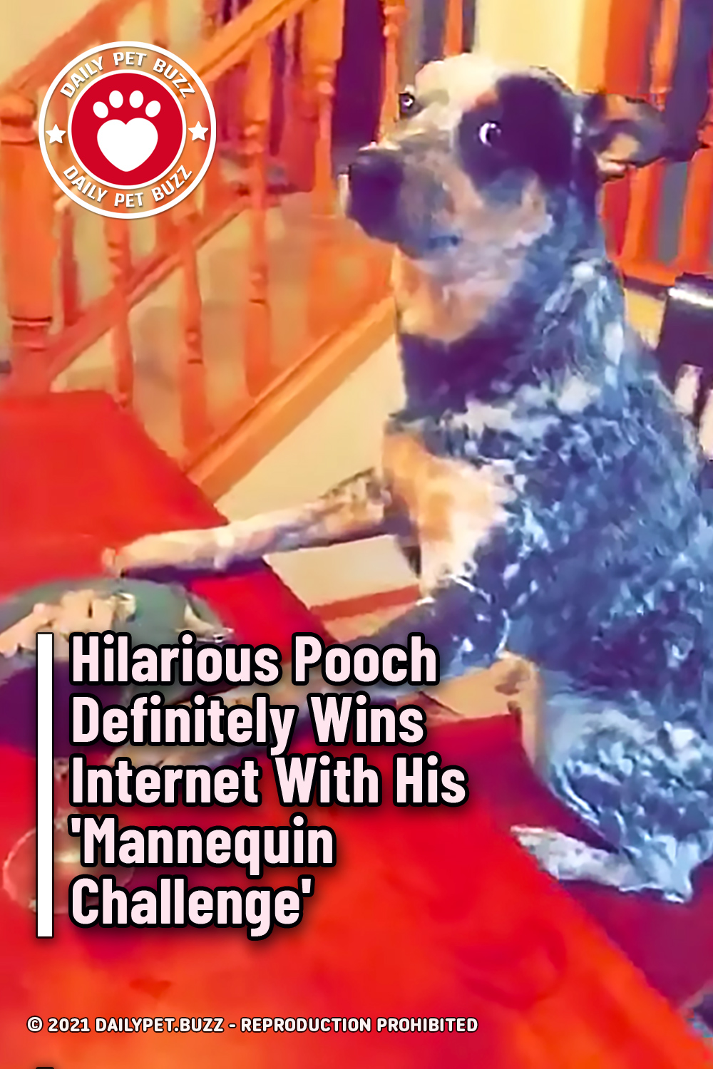 Hilarious Pooch Definitely Wins Internet With His \'Mannequin Challenge\'