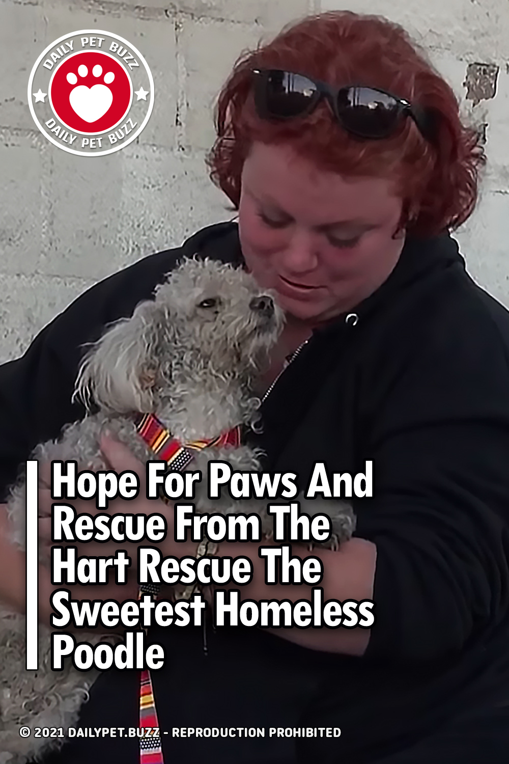 Hope For Paws And Rescue From The Hart Rescue The Sweetest Homeless Poodle