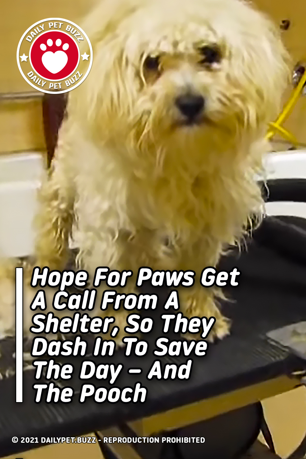 Hope For Paws Get A Call From A Shelter, So They Dash In To Save The Day – And The Pooch