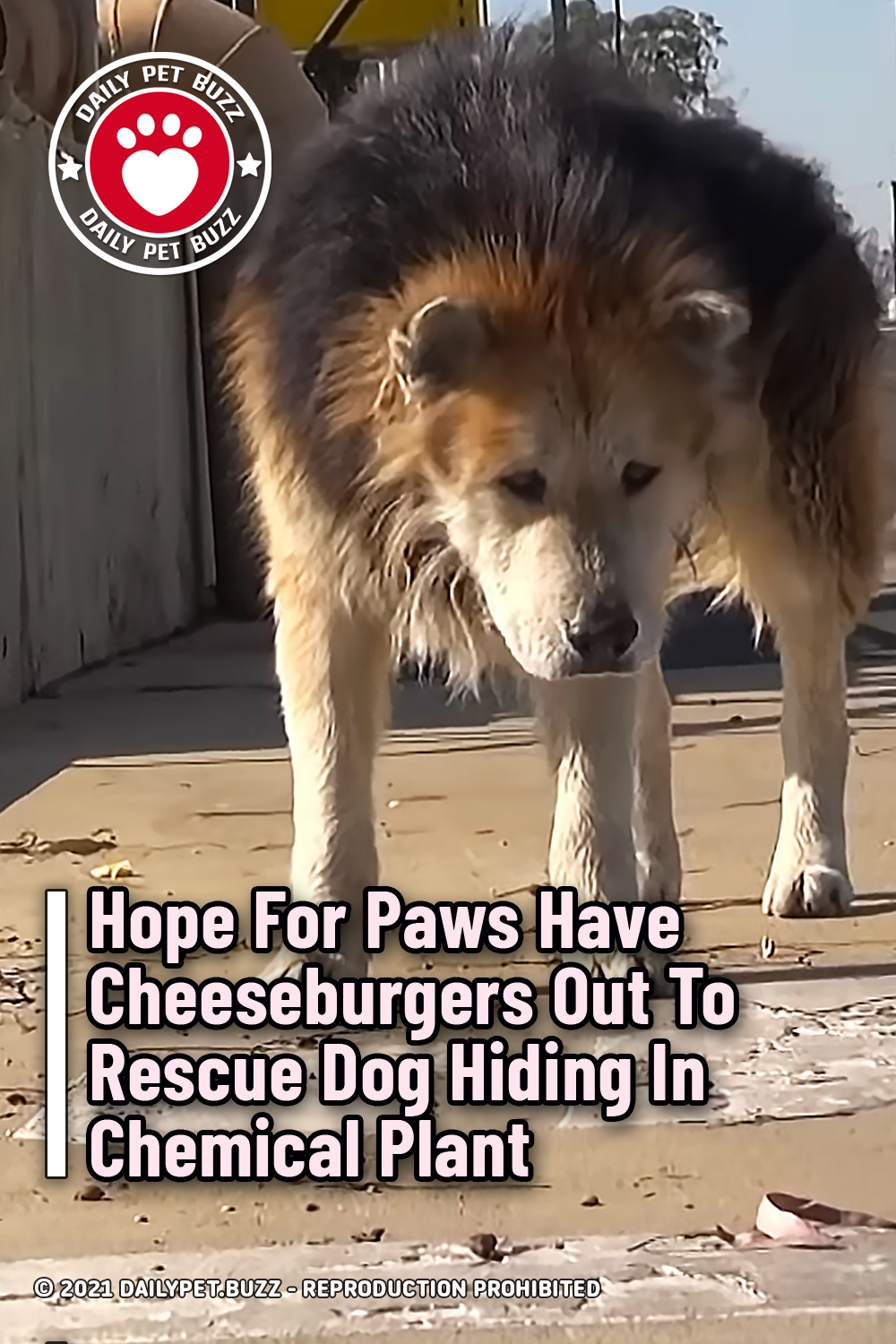 Hope For Paws Have Cheeseburgers Out To Rescue Dog Hiding In Chemical Plant